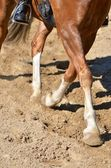 Legs of a horse doing dressage — Stock Photo