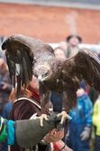 Eagle poised for flight on a gauntlet — Stock Photo