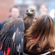 Stock Photo: Eagle poised for flight with its falconer
