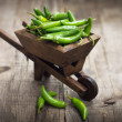 Jalapenos chili pepper in a miniature wheelbarrow — Stock Photo