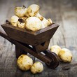 Fresh Muschrooms in a miniature wheelbarrow — Stock Photo