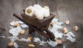 Dientes de ajo en una carretilla en miniatura — Foto de Stock