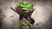 Minyatür el arabası jalapenos chili biber — Stok fotoğraf