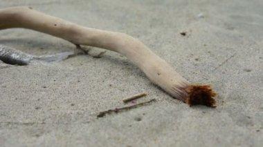 Dead Fish — Stock Video