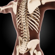Male medical skeleton — Stock Photo