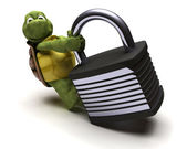 Tortoise with padlock — Stock Photo