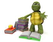 żółw czytanie książki — Zdjęcie stockowe