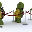 Stock Photo: Tortoises waiting in line