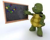 Tortoise with school chalk board — Stockfoto