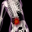 Stock Photo: Back ache in female skeleton