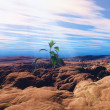 Seedling growing in cracked dry ground — Stock Photo