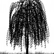 Stock Vector: Weeping willow