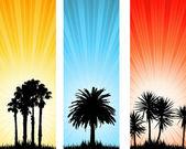 Summer backgrounds — Stock Vector