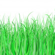 Green grass — Stock Vector #41669897