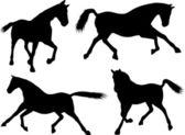 Horses silhouette — Stock Vector
