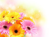 Gerbera daisies on pastel sparkly background — Stock Photo