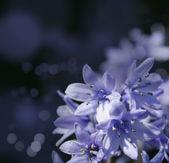 Bluebells — Stock Photo