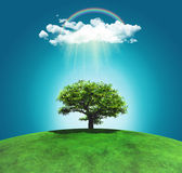 3D render of a grassy landscape with a tree, rainbow and rainclo — Stock Photo