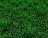 Spring grass background — Stock Photo