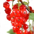 Stock Photo: Redcurrant
