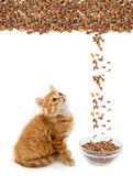 Cat eating dry cat food — Stock Photo