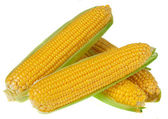 An ear of corn isolated on a white background — Stock Photo