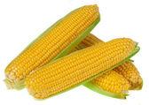 Una spiga di grano isolato su sfondo bianco — Foto Stock