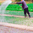 Asian man  watering the garden — Stock Photo