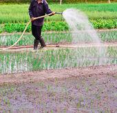 Homem asiático de regar o jardim — Fotografia Stock
