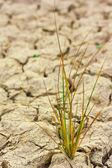 乾燥の褐色土中の小さな植物 — ストック写真