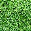 Stock Photo: Artificial tiny green leaves texture