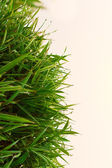 Top view of small bamboo bush — Stock Photo