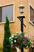 Flower pots hanging on the light pole — Stock Photo
