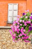 Vertikal bild av rosa petunia blommor — Stockfoto
