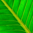 Fresh green leaf  — Stock Photo