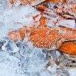 Crabs in an ice tray — Stock Photo