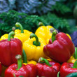 Ripe Yellow, Red and Green Peppers in Vegetables Market — Stock Photo