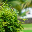 Path of green bush — Stock Photo #36434859