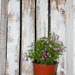 Flowers in a wooden box — Stockfoto