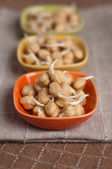 Chickpea sprouts — Stock Photo