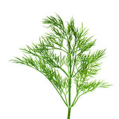 Sprig of dill. — Stock Photo