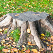 The old stump of the tree. — Stock Photo #13741099