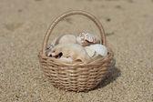 Basket with shells on the seashore — Stock Photo