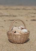 Basket with seashells on the beach — Stock Photo