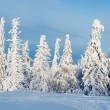 Landscape with snow-covered trees — Stock Photo #18561445