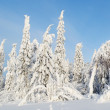 Beautiful landscape with snow-covered trees — Stock Photo #18648375
