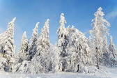 Landscape with snow-covered trees — Stockfoto