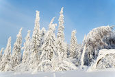Beautiful landscape with snow-covered trees — Stock Photo