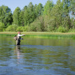Fisherman catches of chub fly fishing in the Chusovaya river — Stock Photo