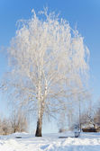 Beautiful snow-covered birch in winter day — Foto de Stock
